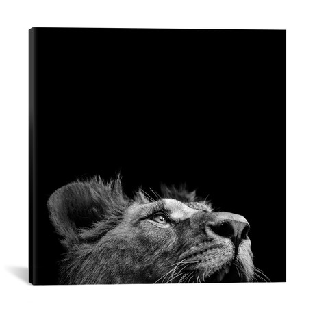 "Lion In Black & White II // Lukas Holas (18""W x 18""H x 0.75""D)"