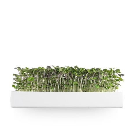 Grow Book // Basil Edition