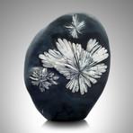 Chrsanthemum Stone