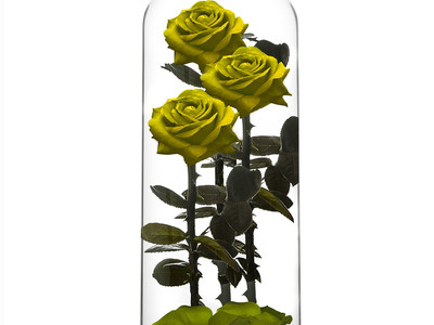 Photo of ROSEPHORIA Everlasting Roses Everlasting Rose TRIO // Yellow (Small) by Touch Of Modern
