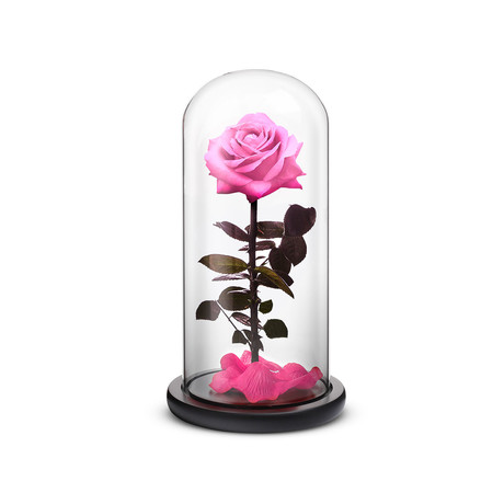 Everlasting Rose // Pink (Small)