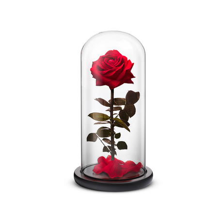 Everlasting Rose // Red (Small)