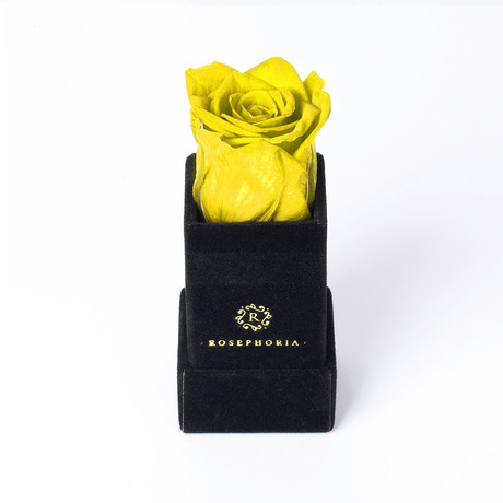 Ring Box // Yellow