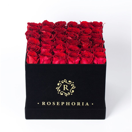 36 Rose Square Box // Red