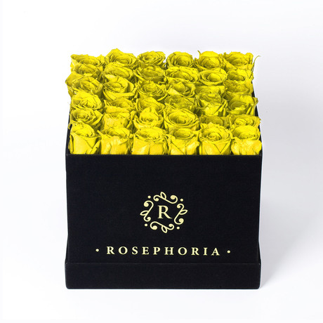 36 Rose Square Box // Yellow