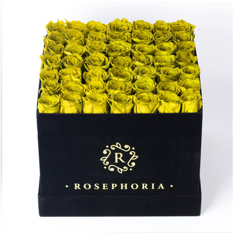 49 Rose Square Box // Yellow
