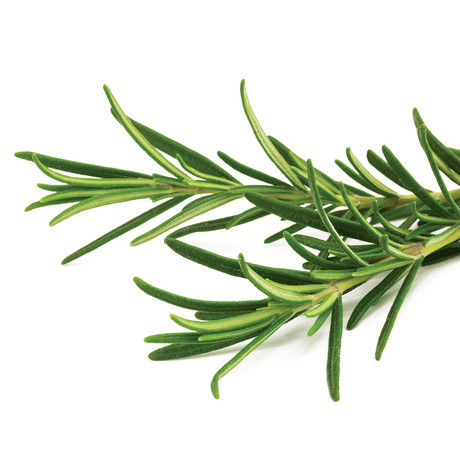 Refill // 3 Pieces // Rosemary // Set of 2