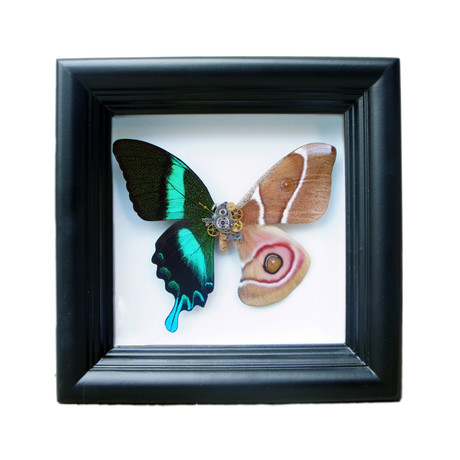 Green Butterfly and Moth Shadow Box