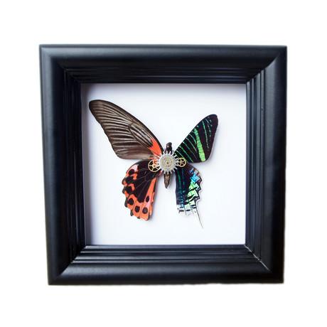 Red Butterfly and Green Moth Shadow Box