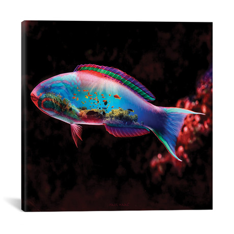 "Fish // Paul Haag (18""W x 18""H x 0.75""D)"
