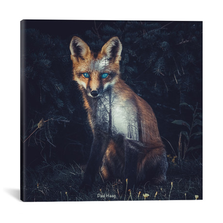 "Fox II // Paul Haag (18""W x 18""H x 0.75""D)"