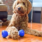 GoBone // Interactive Dog Toy