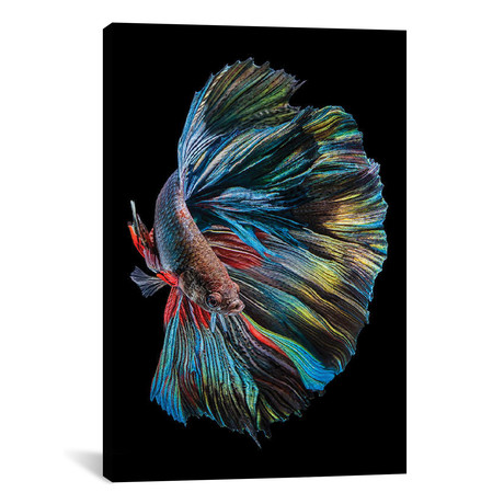"The Betta Fish // Andi Halil (18""W x 26""H x 0.75""D)"
