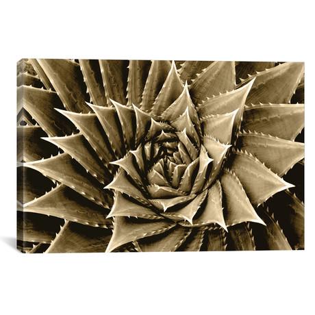 "Taupe Succulent I // Mia Jensen (26""W x 18""H x 0.75""D)"
