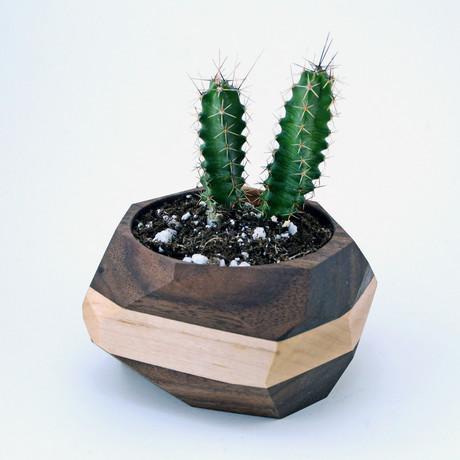 Geometric Cactus Planter (Maple + Walnut)