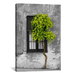 "Tree in Front of Window Green Pop Color Pop // Panoramic Images (12""W x 18""H x 0.75""D)"