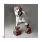 "Boxing Dog // Rachael Hale (12""W x 12""H x 0.75""D)"