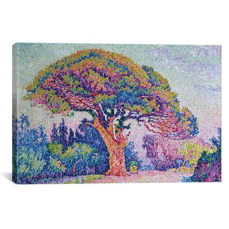 """The Pine Tree at St. Tropez, 1909 // Paul Signac (26""""W x 18""""H x 0.75""""D)"""