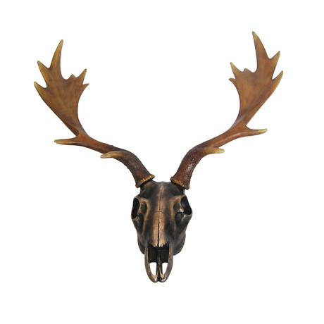 Wall Mounted Reindeer Skull