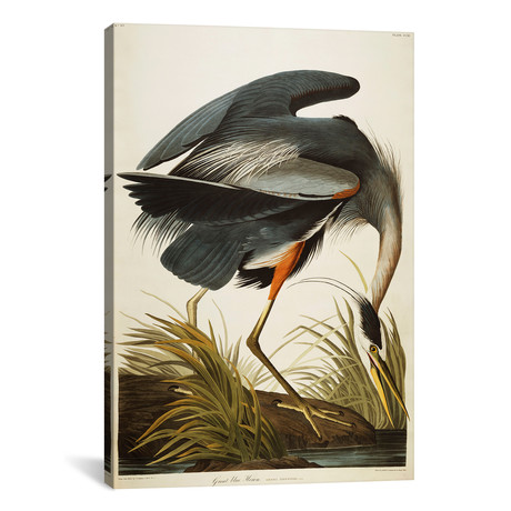 "Great Blue Heron // John James Audubon (26""W x 40""H x 1.5""D)"