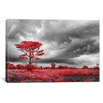 "Red Tree - Sao Paulo, Brazil // Glauco Meneghelli (18""W x 12""H x 0.75""D)"