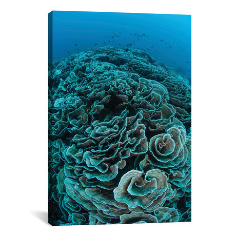 Corals Are Beginning To Bleach On A Reef In Indonesia II // Ethan Daniels