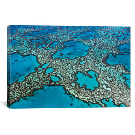 "Coral Formations On Hardy Reef, Great Barrier Reef, Queensland, Australia // Ingo Arndt (40""W x 26""H x 1.5""D)"