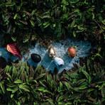 Thinking Egg // Nest