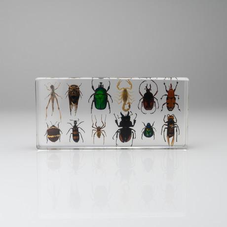 12 Genuine Bugs in Acrylic