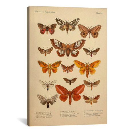 American Lepidoptera, Plate 3 by Print Collection