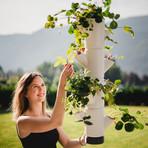 Sissi Strawberry // Hanging