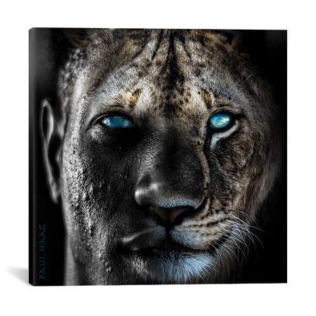 "Lion Man // Paul Haag (18""W x 18""H x 0.75""D)"