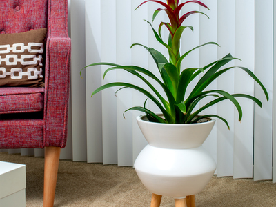 photo of Maggie Ceramic Planter by Touch Of Modern