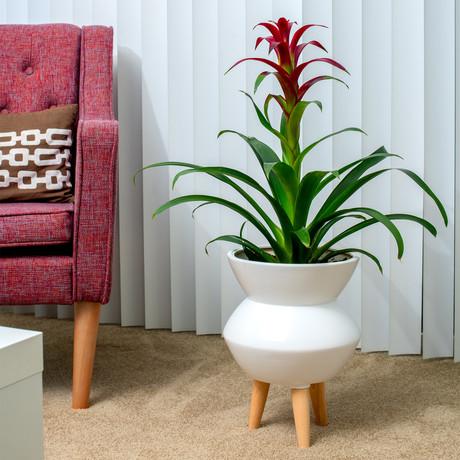 Maggie Ceramic Planter
