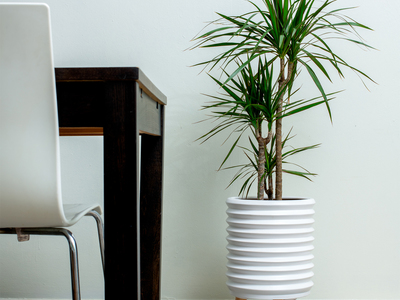 photo of Groove Jr. Ceramic Planter by Touch Of Modern