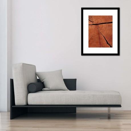 "Redwood After The Storm Framed Wall Art (12""W x 16""H x 1""D)"