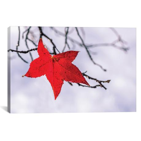 """Red Leaf // Marco Carmassi (26""""W x 18""""H x 0.75""""D)"""