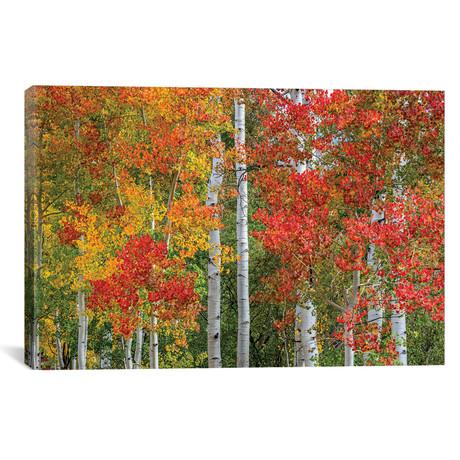 "Colorado Autumn // Marco Carmassi (26""W x 18""H x 0.75""D)"