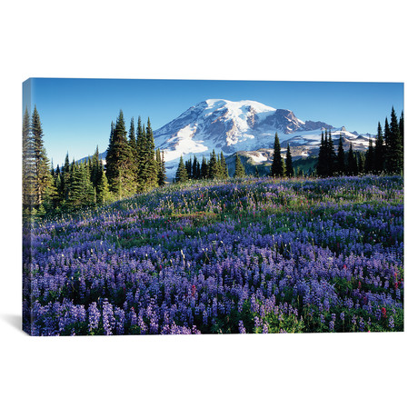 "Snow-Covered Mount Rainier With A Wildflower Field In The Foreground, Washington // Jamie & Judy Wild (26""W x 18""H x 0.75""D)"