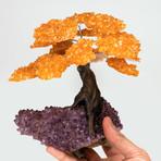Citrine Clustered Gemstone Tree on Amethyst Matrix // The Money Tree // Large