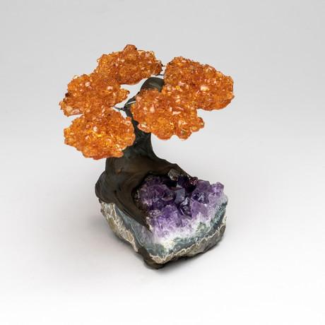 Citrine Clustered Gemstone Tree on Amethyst Matrix // The Money Tree // Small