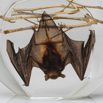 Genuine Hanging Bat in Lucite // Medium