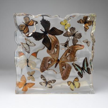 15 Genuine Butterflies // Display Frame