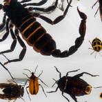 50 Genuine Bugs // Display Frame