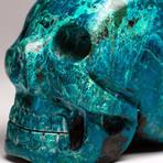Genuine Polished Chrysocolla Skull // I