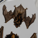 2 Genuine Bats in Lucite