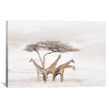 "White Giraffes (18""W x 12""H x 0.75""D)"
