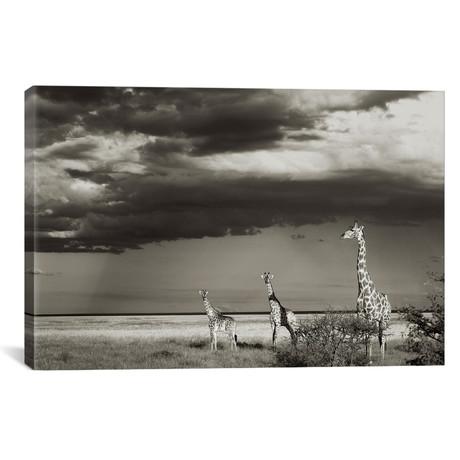 "B+W Giraffe Trio (18""W x 12""H x 0.75""D)"