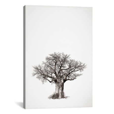"""Baobab Legacy IV (12""""W x 18""""H x 0.75""""D)"""