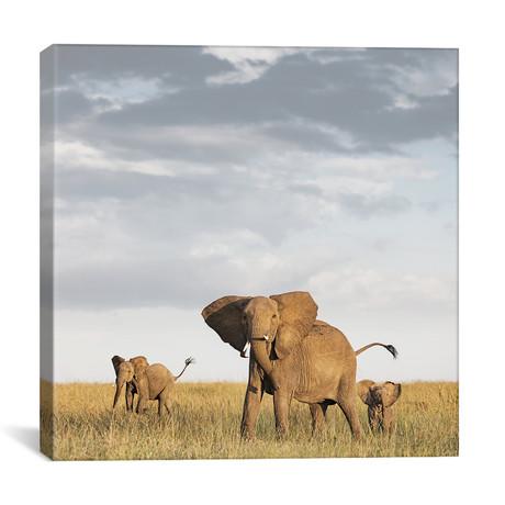 """Color Elephant + Calves (12""""W x 12""""H x 0.75""""D)"""